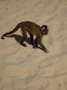 Entirely unrelated but oh so cute photo of beachside monkey! [photo: Claire Varley]